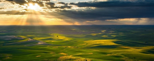 Golden Rays Over Palouse - Zack Schnepf - 24454083