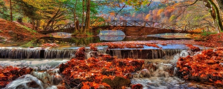 Fall Colors - Hasim Sahin - 51119388